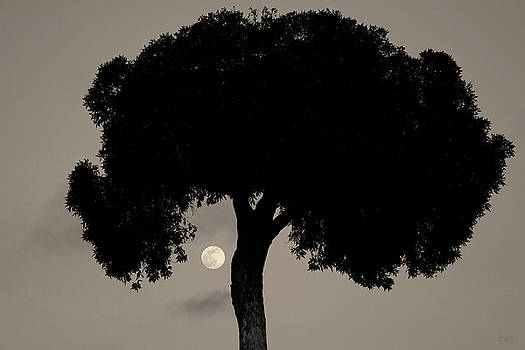 Lone Tree and Rising Moon Toned by David Gordon