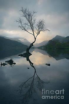 Lone Tree At Llyn Padarn by Amanda Elwell