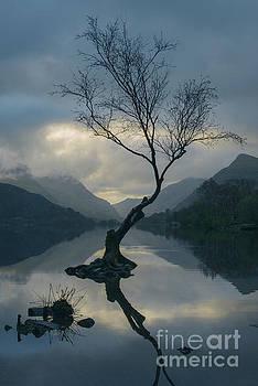 Lone Tree At Llyn Padarn At Sunrise by Amanda Elwell