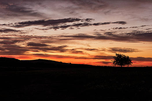 Lone Tree at sunrise by Katherine Worley