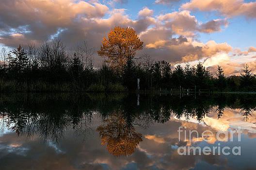 Paul Conrad - Lone Tree at Sunset