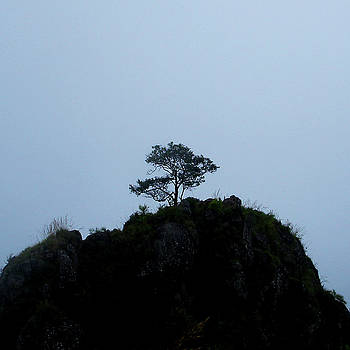 Lone tree atop hillock near Coonoor, India by Misentropy