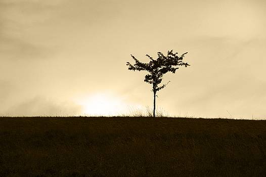 Lone Tree by Chris Day