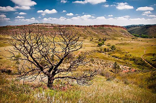 Lone Tree, Colorado by Preston Broadfoot