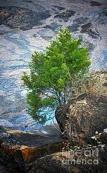 Dave Bosse - Lone Tree