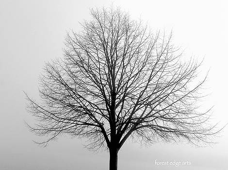 Lone Tree  by Dick Bourgault