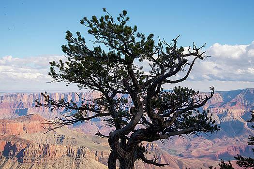 Lone Tree by Frank Madia