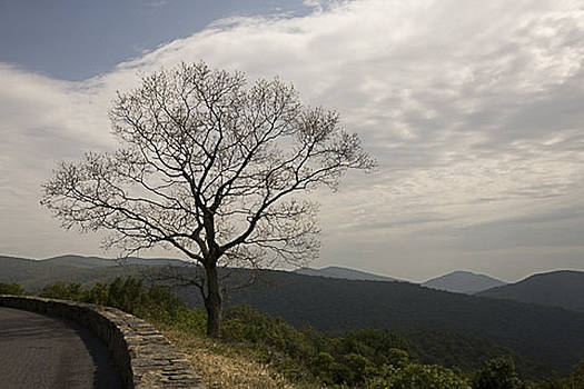 Lone Tree by George Lovelace