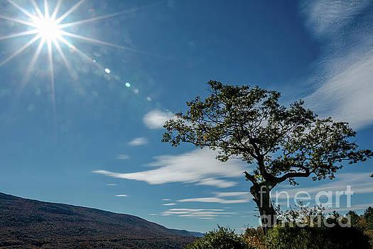 Lone Tree Hildene by Mim White