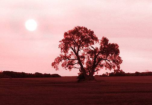 Lone Tree in Dusty Pink by Krista Barth