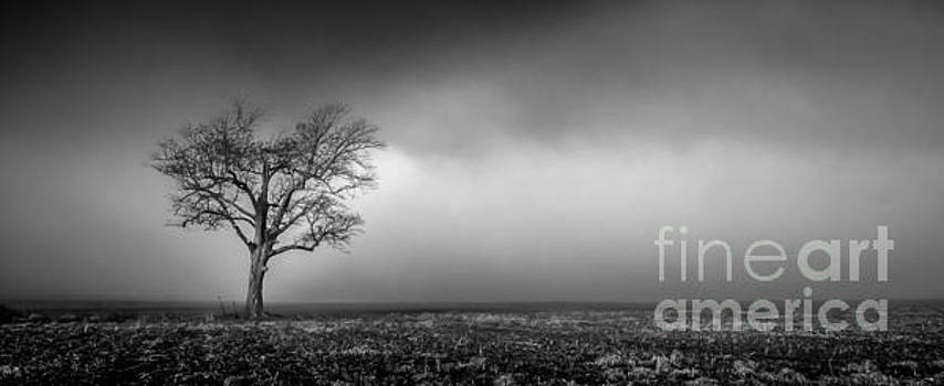 Lone Tree in the Mississippi Delta by T Lowry Wilson