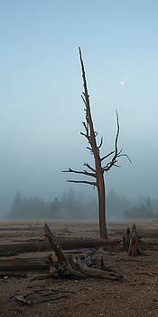 Lone Tree in the Mist by Leslie-margaret Bohle