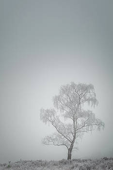 Lone Tree in Winter by Andy Astbury