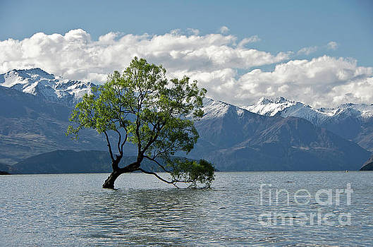 Lone tree. lake Wanaka. New Zealand. by Yurix Sardinelly
