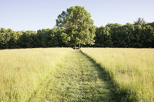 Lone Tree, Monson Center by Morgain Bailey