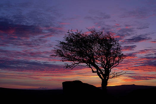 Lone tree near Holwell Tor on Dartmoor by Pete Hemington