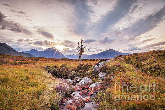 Lone Tree on Rannoch Moor in Scotland by Colin and Linda McKie