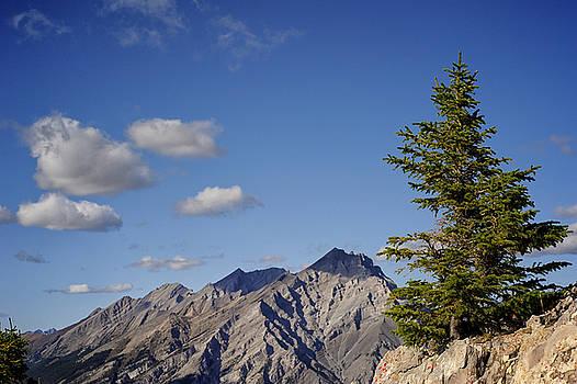 Mary Lee Dereske - Lone Tree on Sanson Peak