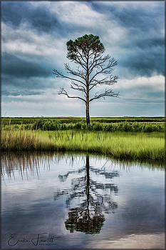 Erika Fawcett - Lone Tree Reflected