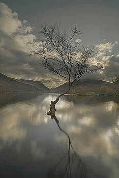Lone Tree Reflection by Andy Astbury