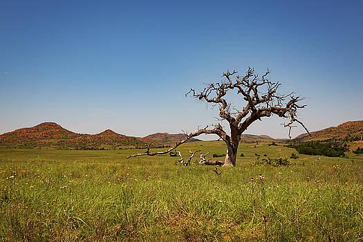 Ricky Barnard - Lone Tree