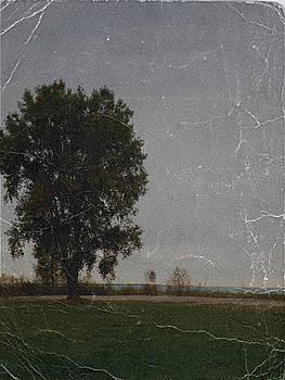 Scott Hovind - Lone tree