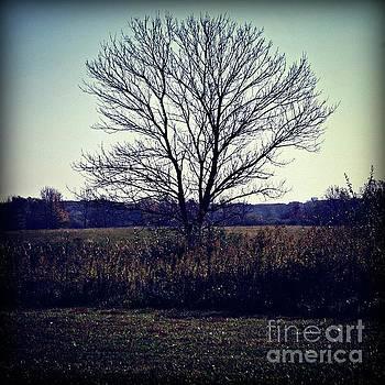 Frank J Casella - Lone Tree Silhouette in Field - Color Square
