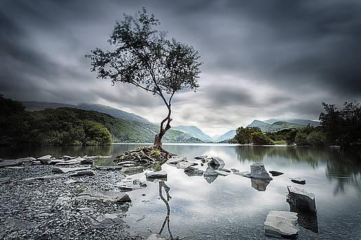 Lone Tree by Steve Caldwell