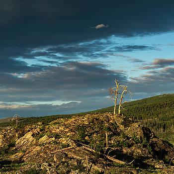 Lone Tree Sunset by Dave Matchett