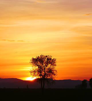 Nick Gustafson - Lone Tree Sunset