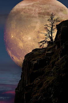 Lone tree with super moon by Mihai Andritoiu