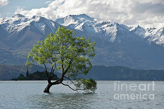 Lone tree.Lake Wanaka, New Zealand by Yurix Sardinelly