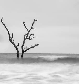 Bonnie Davidson - Lone Tree