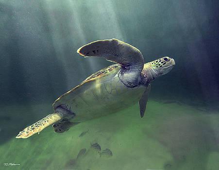 Lone Turtle by Tim Fitzharris