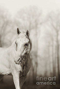 Lone white wild horse by Dimitar Hristov