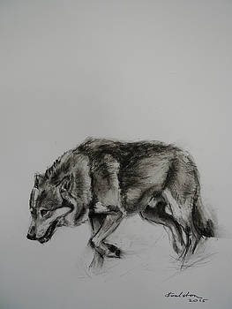Lone Wolf by Veronica Coulston