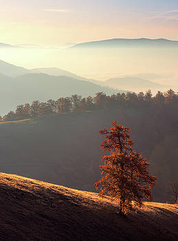 Lonely autumn tree in mountains by Sergey Ryzhkov