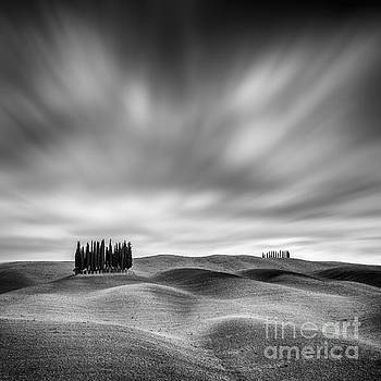 Lonely Cypresses  by Pawel Klarecki