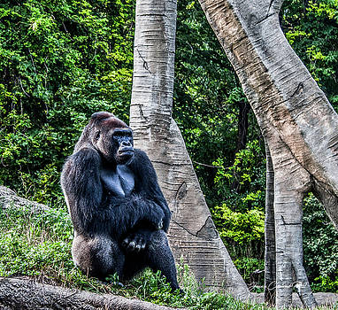Lonely Gorilla by Joann Copeland-Paul