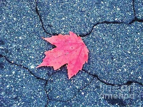 Lonely Maple by Jessica Wood