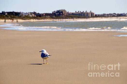 Lonely Seagull on Kiawah Island Beach by Catherine Sherman