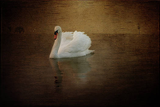 Lonely swan by Carolyn Dalessandro