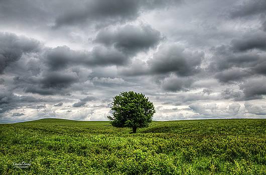 Lonely Tree by Crystal Socha