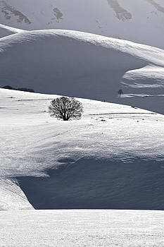 Lonely tree in the snow by Luigi Morbidelli