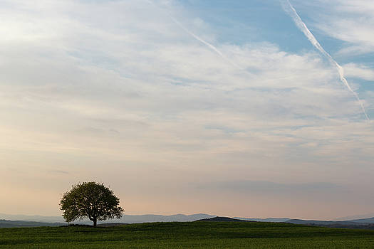 Lonely tree  in Tuscany by Massimo Discepoli