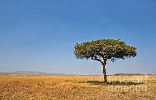 Lonely tree, Massai Mara, Kenya by Wibke W