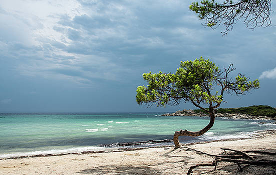 Lonely tree on the beach by Michalakis Ppalis