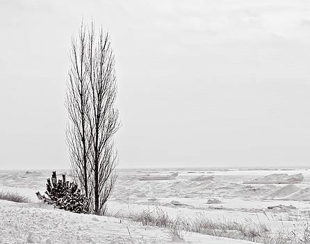 Lonely Tree by Winnie Chrzanowski