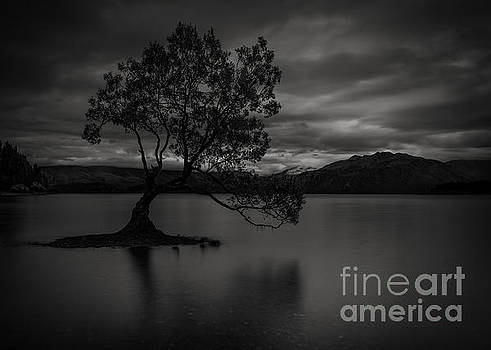 Lonely Wanaka Tree by Paul Woodford