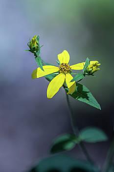 Elvira Pinkhas - Lonely Wildflower